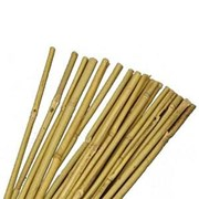 Jvl Bamboo Canes 183cm 10s (05-006)