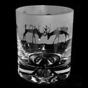 Animo Stag Whiskey Tumbler (ANT17STAG)