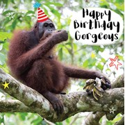 Orangutan Eating Bananas Card (LL0082W)