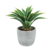Artificial Potted Succulent (PT193022)
