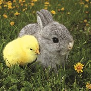 Easter Bunny And Yellow Chick (SEHI050W)