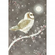 Boxed Christmas Cards Starry Night Owl 20s (0307)