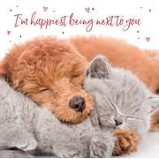 Valentines Day Puppy And Kitten (SVHI030W)