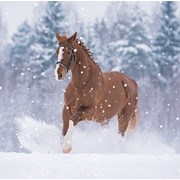 Christmas Cards Set A Red Horse In Snow (X13254RCJP)