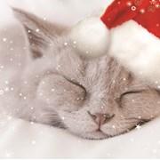 Christmas Cards Set A Christmas Kitten (X13259RCJP)