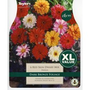 Dahlia Red Skin (XL536)